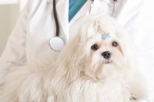 acupuncture for dogs in centennial, co